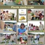 07. Plante