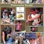 17. Prelucrarea lemnului
